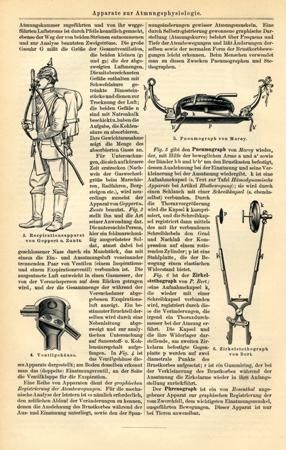 Arzneipflanzen II um 1895 Büttenfaksimile /& Beschreibung Mxz 1 im Goldrahmen