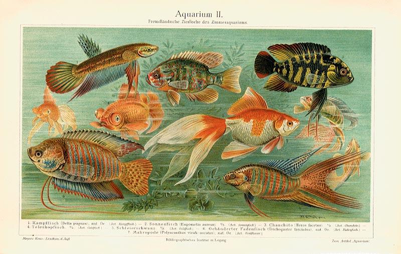 Aquarium Fische Koralle Krebs Languste Originale Fxz - Billerantik